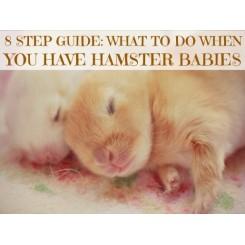 اطلاعات اولیه در باره زمان بچه دار شدن همستر به چه صورت می باشد ؟