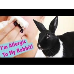 آیا حیوانات خانگی برای فردی که حساسیت دارد مناسب است ؟