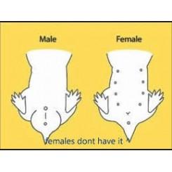 چه تعداد و جنسیت همستر تهیه کنیم ؟