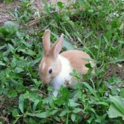 خرگوش گمشده به نام بانی