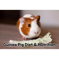 رژیم غذایی خوکچه هندی