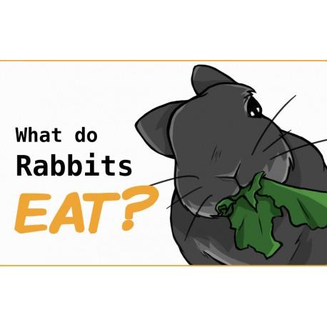 رژیم غذایی خرگوشها