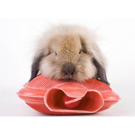 سرما خوردگی در جوندگان و خرگوش شکلان