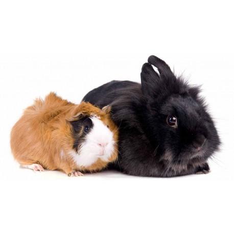 انتقال کرم آسکاریس به حیوانات خانگی و صاحبان آنها