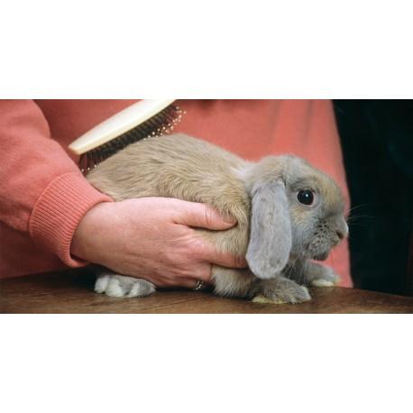دلایل شانه زدن موهای خرگوش شکلان