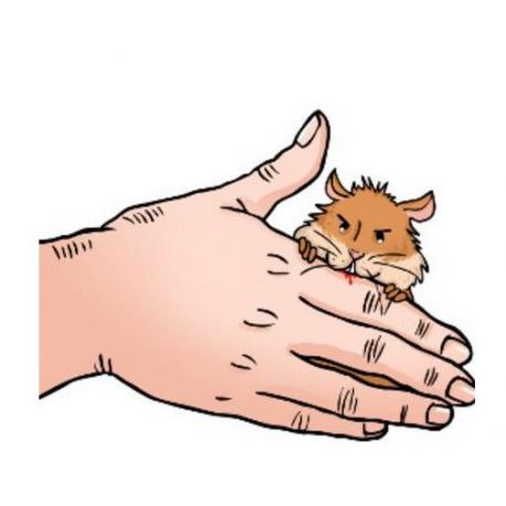 گاز گرفتن همسترها و دلایل آن
