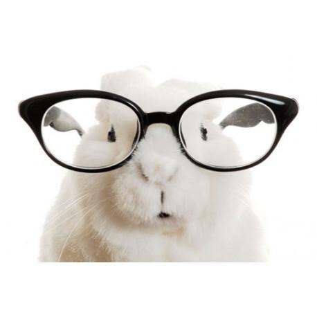 بینایی در خرگوش شکلان