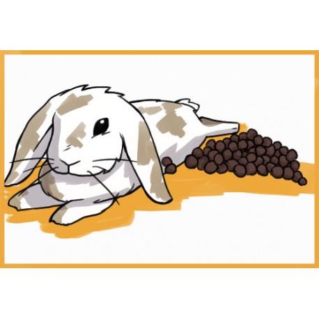 انواع مدفوع در خرگوش شکلان