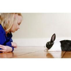 آموزش نام به خرگوش شکلان و شرطی کردن آنها