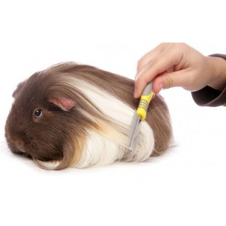 دلایل شانه زدن موهای خوکچه هندیها