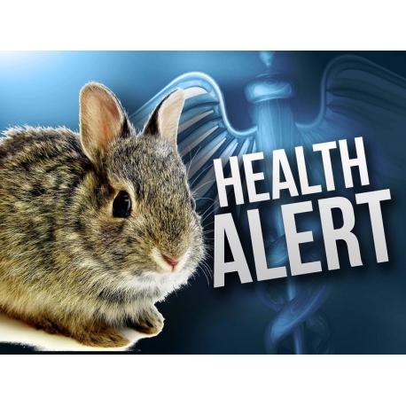 بیماری مشترک بین انسان و جوندگان (تولارمی)