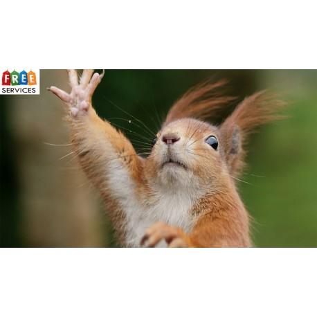داستان زندگی سنجاب در اسارت