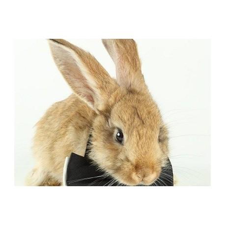 من (خرگوش) را بیشتر بشناسید !!!