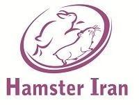 همستر , خوکچه هندی و خرگوش